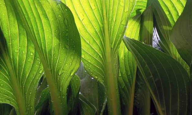 Quand arroser une plante d'appartement ?