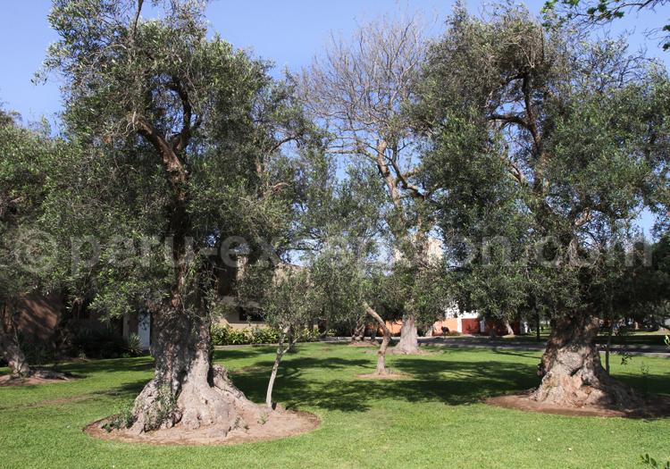 olivar-san-isidro Lima