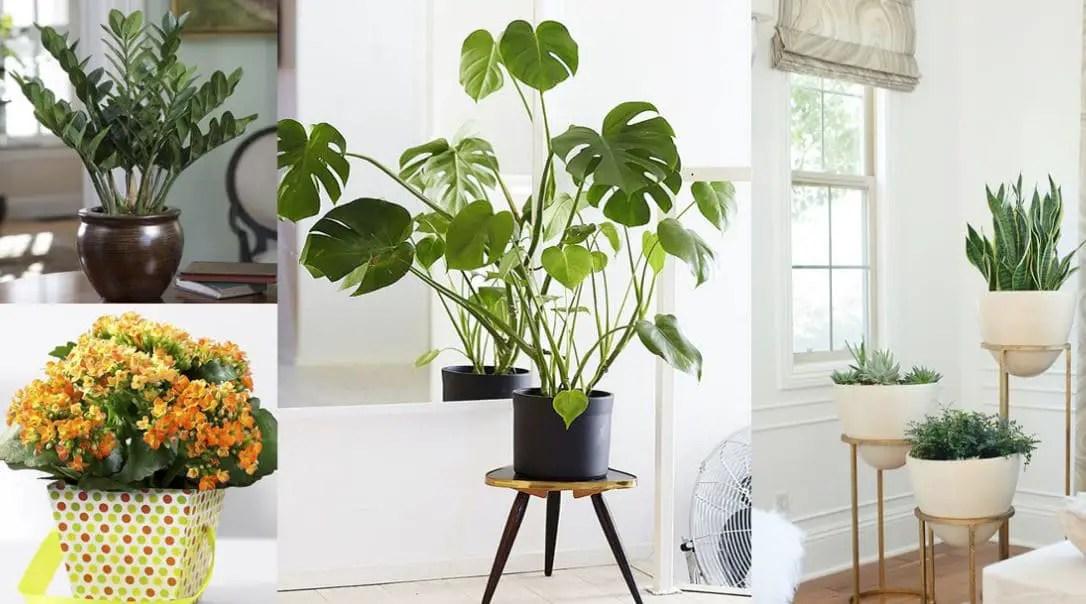 Decoraci 243 N De Interiores Con Plantas De Interior