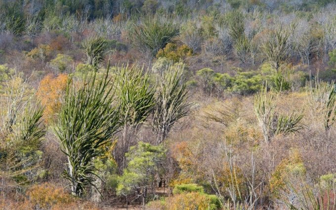 Much of Charlie's career has been spent in southern Madagascar's spiny forest