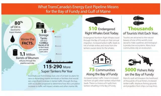 Bay of Fundy Infographic-Eng