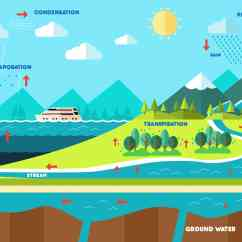 Explain Water Cycle With Diagram Lan Cable Wiring Everything You Need To Know About The And