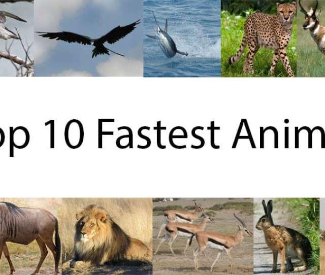 Top  Fastest Animal