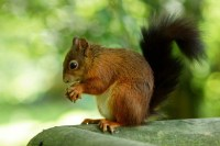 Squirrels can teach us much about makers and takers