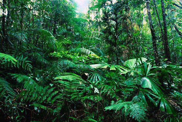Banana trees, ferns, and palm trees. Tropical Rainforest Facts Go Search Now Com