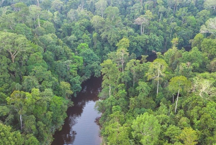 In rainforests elsewhere in the world they will be not be found at all. Tropical Rainforest Biome Location Temperature Precipitation Plants And Animals Conserve Energy Future