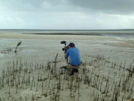 "Videographer Matt McCoy of Loggerhead Productions ""stalking"" piping plovers"