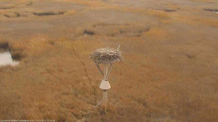 Osprey nest in off season