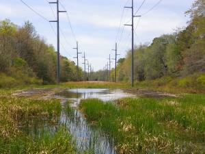 Completed vernal pool along Atlantic City Electric right-of-way