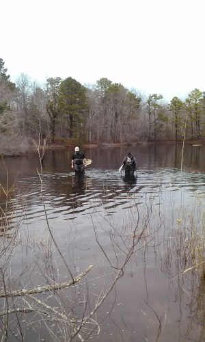 Surveying for TS egg masses