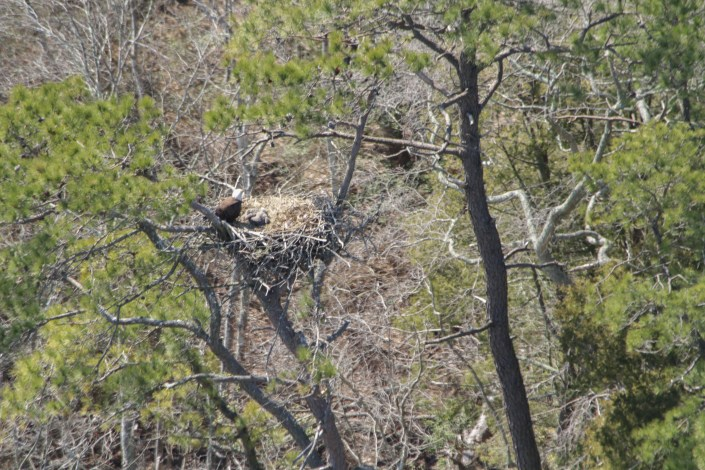 Two young can be seen in this nest!