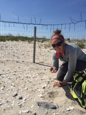 CWF Biological Assistant Emily Heiser places newly hatched piping plover chicks back into nest bowl after banding.