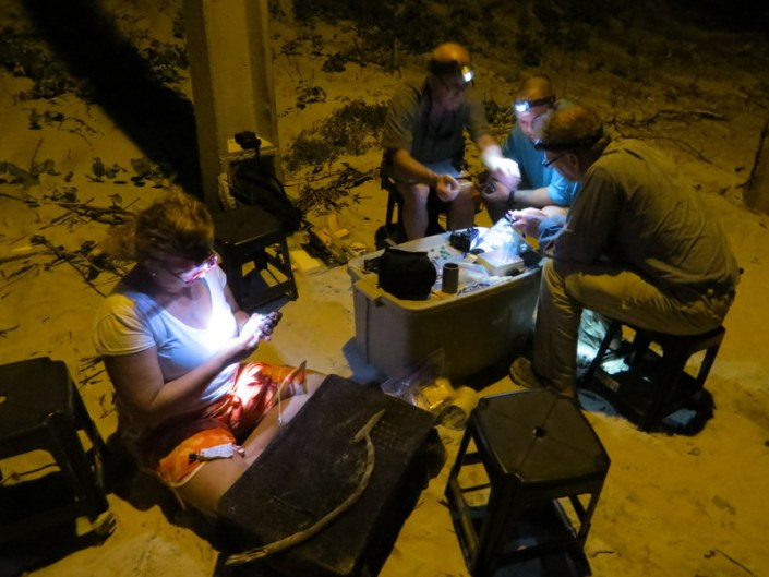 Our crew banding shorebirds in Brazil in 2014.