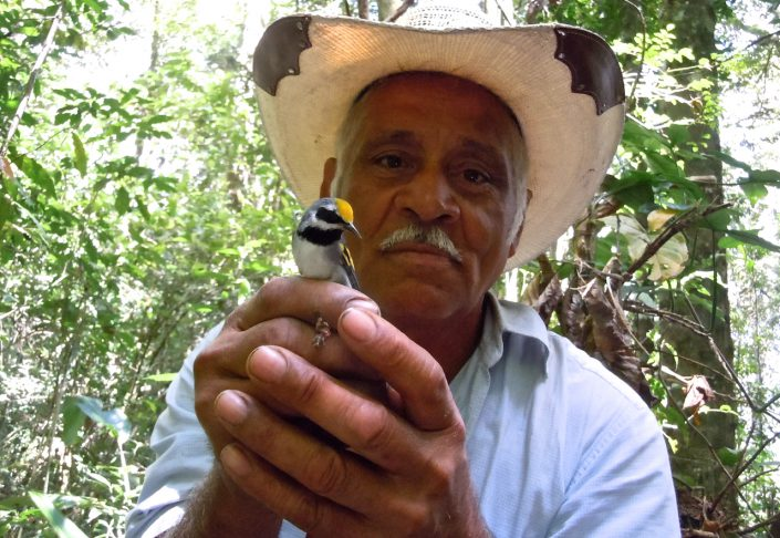 Don Jose Mendoza, Honduran wildlife conservation leader, holding a Golden-winged Warbler captured on his property in Cerro Agua Buena, Olancho, Honduras. Photo by Ruth Bennett.