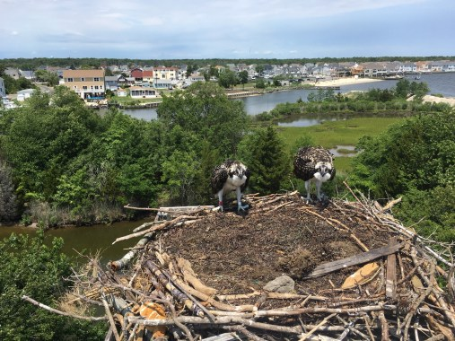 Happy and back on the nest!