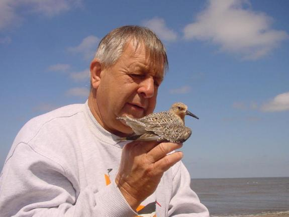 Get Involved Shorebird Project Conserve Wildlife