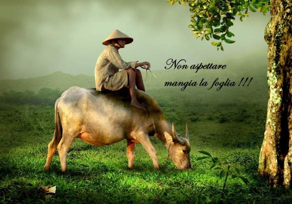 grandpa-old-buffalo