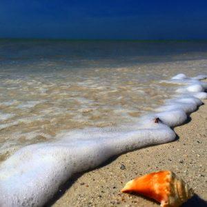 Hidden Gems in Ft. Myers Florida
