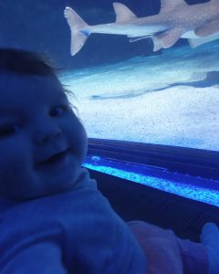 Our Top Things To Do In Cincinnati With A Baby : Newport Aquarium