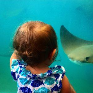 Newport Aquarium with a baby