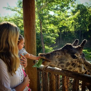 Activities for Young Toddlers- Zoo