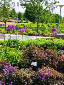 Smale Riverfront Park Garden