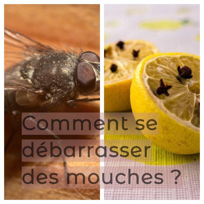 astuces pour se débarrasser des mouches