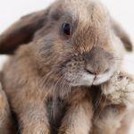 Peut on vivre sans consommer de l'animal ?