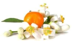 proprieta-dell-olio-essenziale-di-arancio_ng4