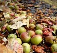 gaspillage-alimentaire-belgique-pommes