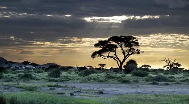 afrique-kenya-arbre