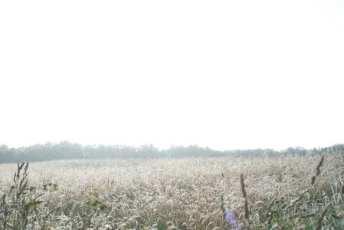Hazy-field