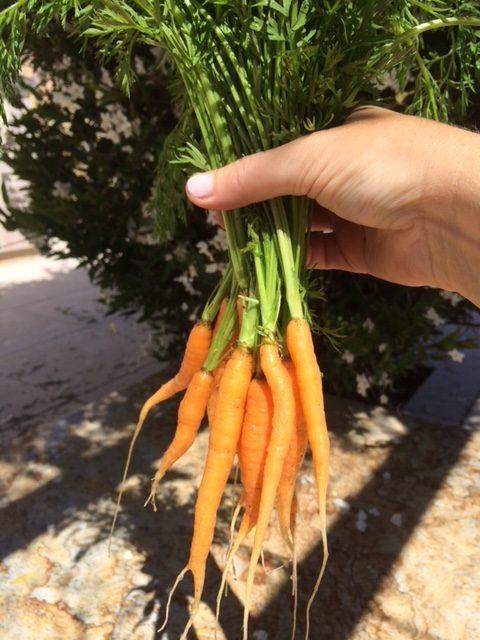 love of gardening