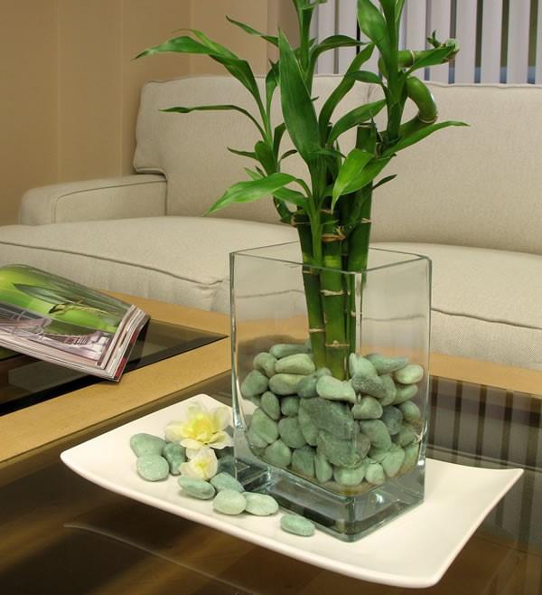 plantas ideales bambu