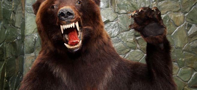 Un vero assalto di lupi famelici alla diligenza