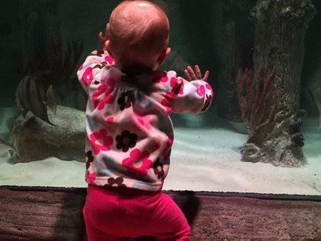 Sea Life Aquarium KC