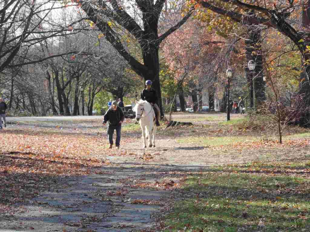 equitación en Prospect Park