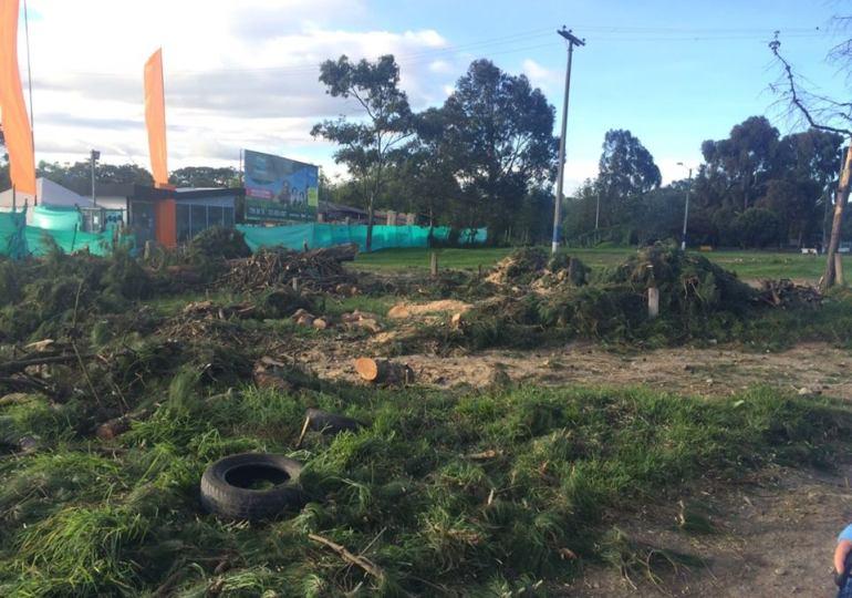 Se abrirá investigación por tala de árboles en La Conejera