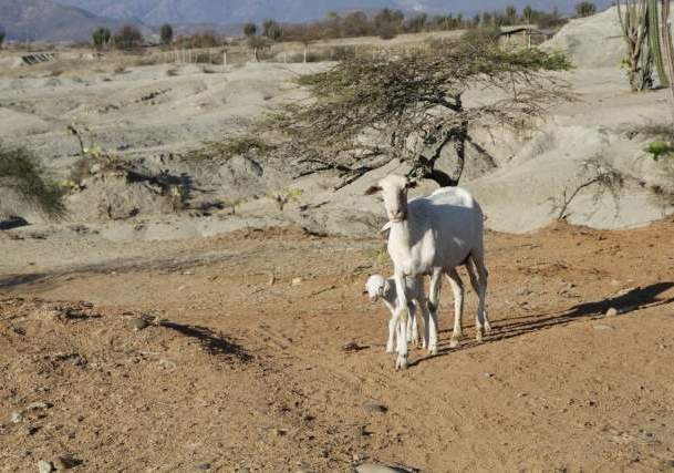 Aguas!  De sequía y acaparamiento