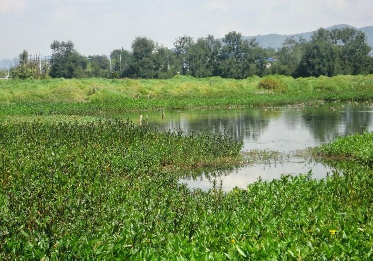 Descontaminación de río Bogotá afectaría Humedal Tibaguya