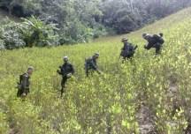 Campesinos del sur de Córdoba no dejarán erradicar forzadamente, ni fumigar con glifosato