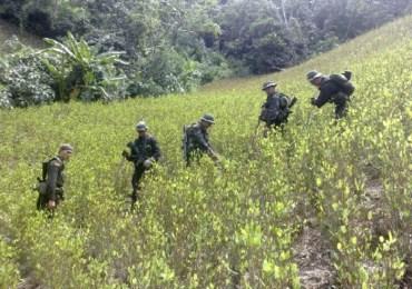 Campesinos del sur de Córdoba no permitirán fumigación con glifosato ni erradicación forzada