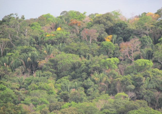 Interéses empresariales, los principales deforestadores de Colombia