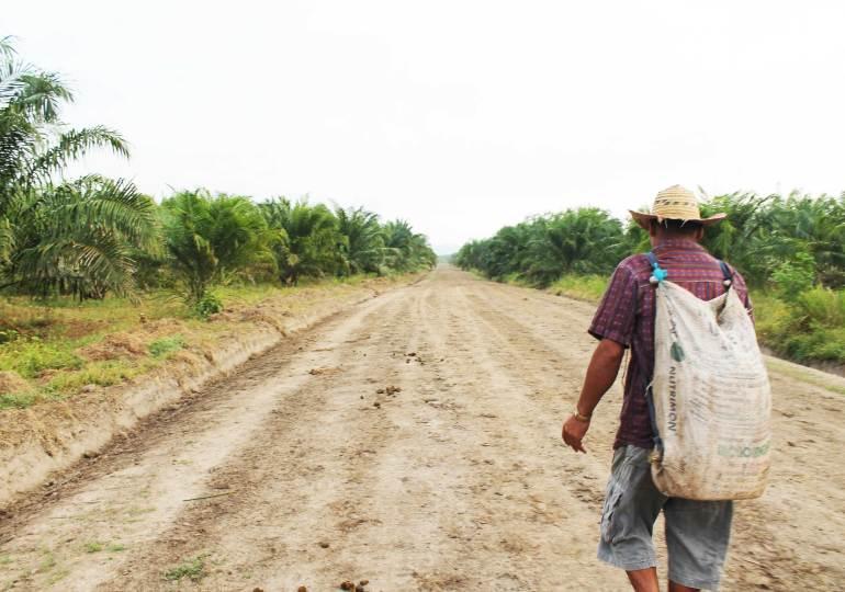 A 5 años de la Ley de restitución el despojo de tierras continúa