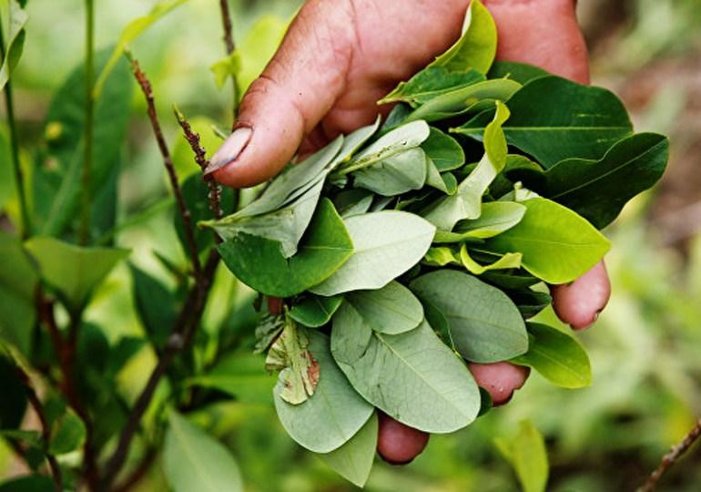 9 recomendaciones para el Gobierno sobre planes de sustitución de cultivos ilícitos