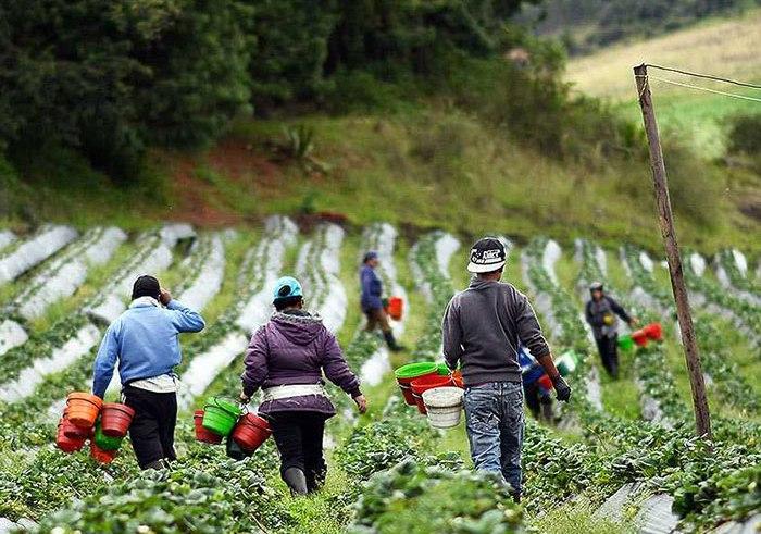 Ley Zidres profundiza afectaciones a mujeres rurales