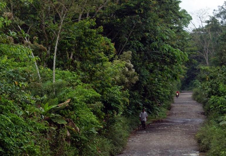 Asesinan a hijo de reclamante de tierras en Curvaradó, Chocó