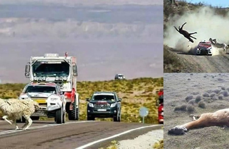 Piden detener el Rally Dakar para proteger a animales y el ambiente