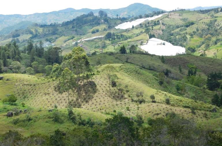 Bosques de Antioquia han perdido el 65% de su extensión