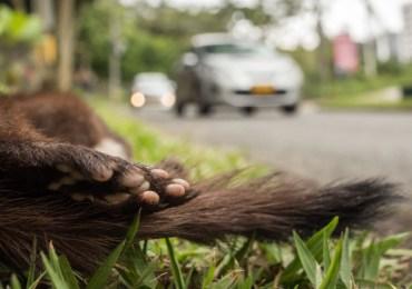Colombia carece de planes que garanticen la vida de la fauna cuando se desarrolla infraestructura: Plataforma ALTO